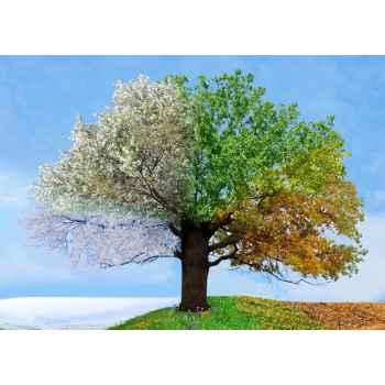 Το δέντρο όλων των εποχών