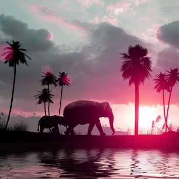 Οικογένεια απο ελέφαντες περπατάνε στο ηλιοβασίλεμα