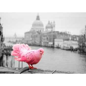 Ροζ περιστέρι στην γέφυρα της Βενετίας