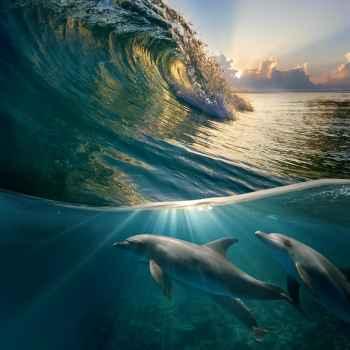 Δελφίνια παίζουν στο νερό