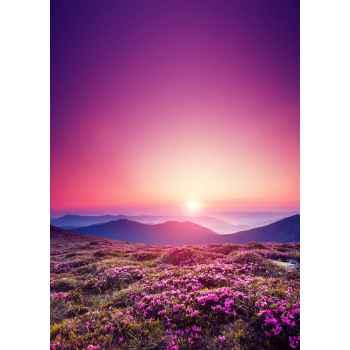 Ροζ λουλούδια το καλοκαίρι στα βουνά