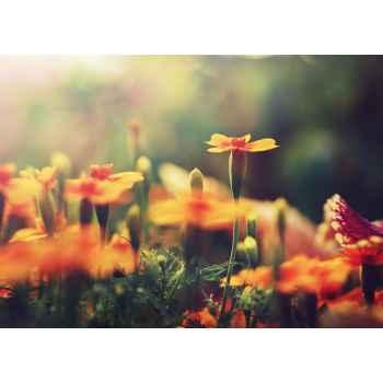 Πορτοκαλί λουλούδια σε κήπο