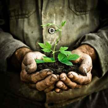 Άντρας κρατάει στα χέρια του ένα νέο φυτό