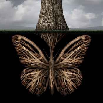 Δημιουργική ρίζα δέντρου σε σχήμα πεταλούδας