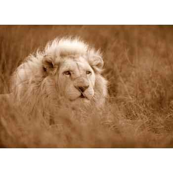 Λευκό λιοντάρι στην Αφρική