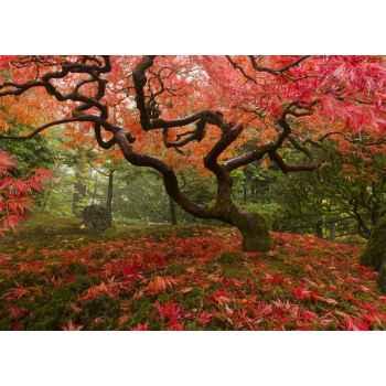 Όμορφο δέντρο