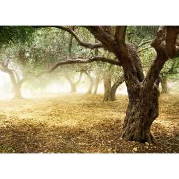 Δέντρα ελιάς