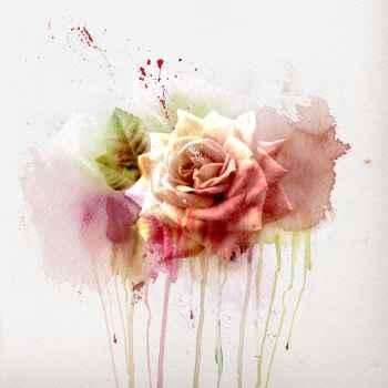 Όμορφο ρομαντικό τριαντάφυλλο