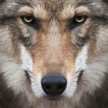 Πορτρέτο λύκου