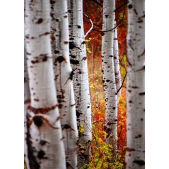 Φθινοπορινά δέντρα