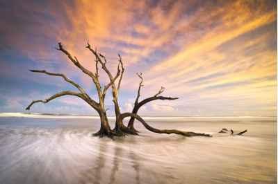 Νεκρό δέντρο στο ηλιοβασίλεμα της νότιας Καλιφόρνιας