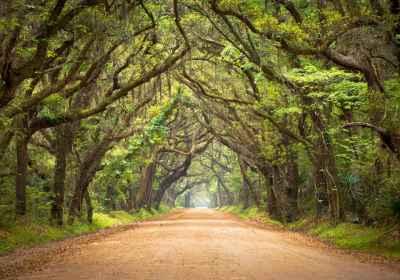 Δρόμος στο δάσος με πλούσια βλάστηση