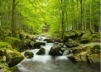 Ρυάκι που διασχίζει το δάσος