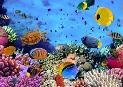 Ο βυθός της θάλασσας