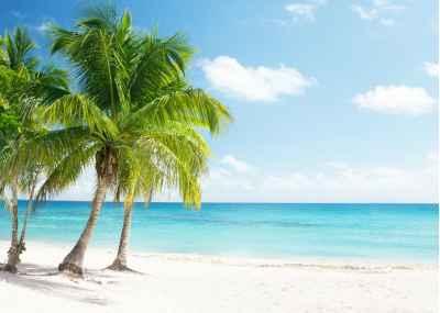 Παραλία στην Καραϊβική με φοίνικες
