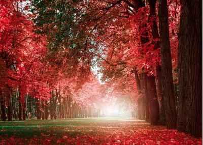 Ρομαντικό πάρκο