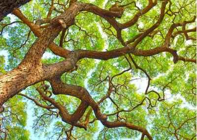 Ανοιξιάτικο δέντρο
