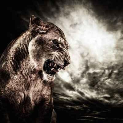 Θυμωμένο λιοντάρι