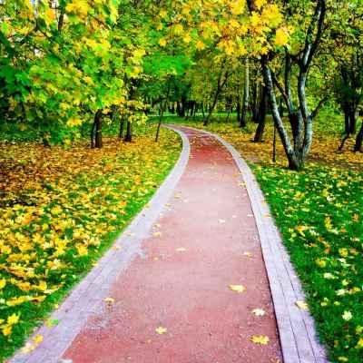 Δρομάκι σε φθινοπωρινό δάσος