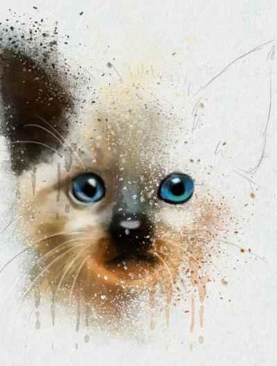 Αφηρημένο πορτρέτο γάτας