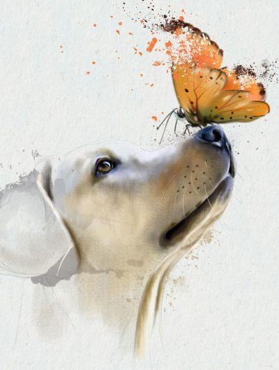 Αφηρημένο πορτρέτο Golden Retriever με πεταλούδα