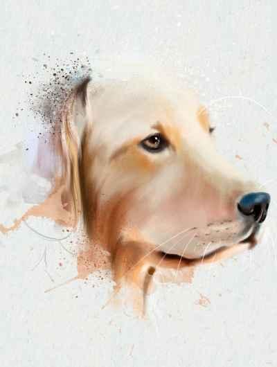 Πορτρέτο σκύλου
