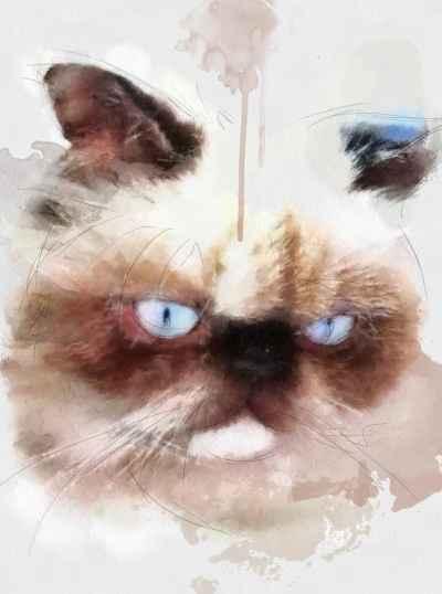 Αφηρημένο πορτέτο γάτας Siamese